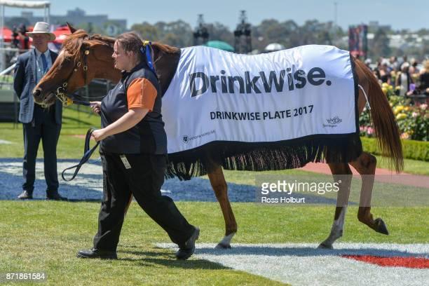 Linguist after winning the DrinkWise Plate at Flemington Racecourse on November 09 2017 in Flemington Australia