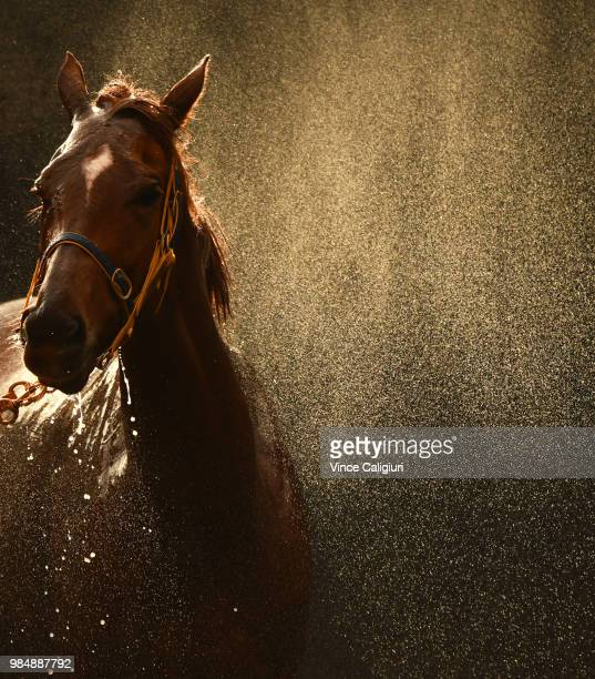 Linguist from Ellerton and Zahra stable enjoys a wash after Race 6 during Melbourne racing at Moonee Valley Racecourse on June 27 2018 in Melbourne...