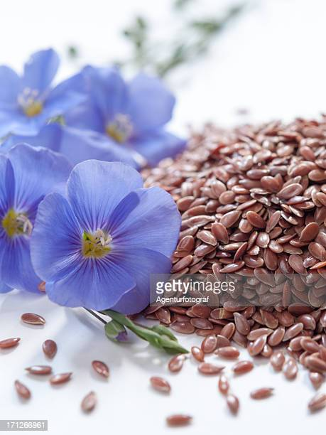linum usitatissimum, blue lin blooms and seeds on withe