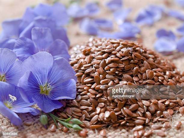 linum usitatissimum l. / linseed - flax seed stock pictures, royalty-free photos & images
