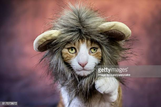 lion cat costume - lion feline stock pictures, royalty-free photos & images