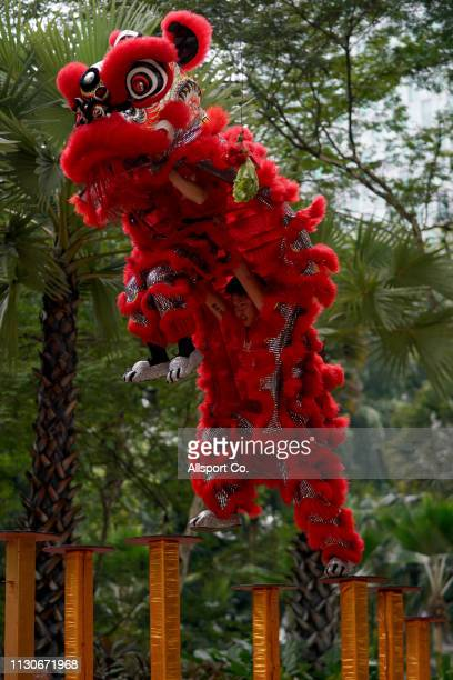 A lion dance performs during the Chap Goh Meh the fifteenth day of the Chinese New Year on February 19 2019 in Kuala Lumpur Malaysia