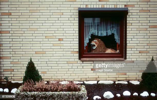 Lion in a window