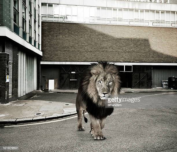 Lion in the alley