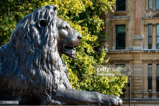 lion in trafalgar square london uk - national portrait gallery london stock pictures, royalty-free photos & images