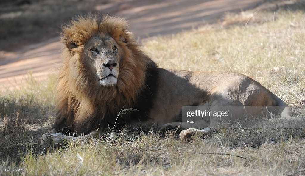 German National Football Team Visits Lion Park : News Photo