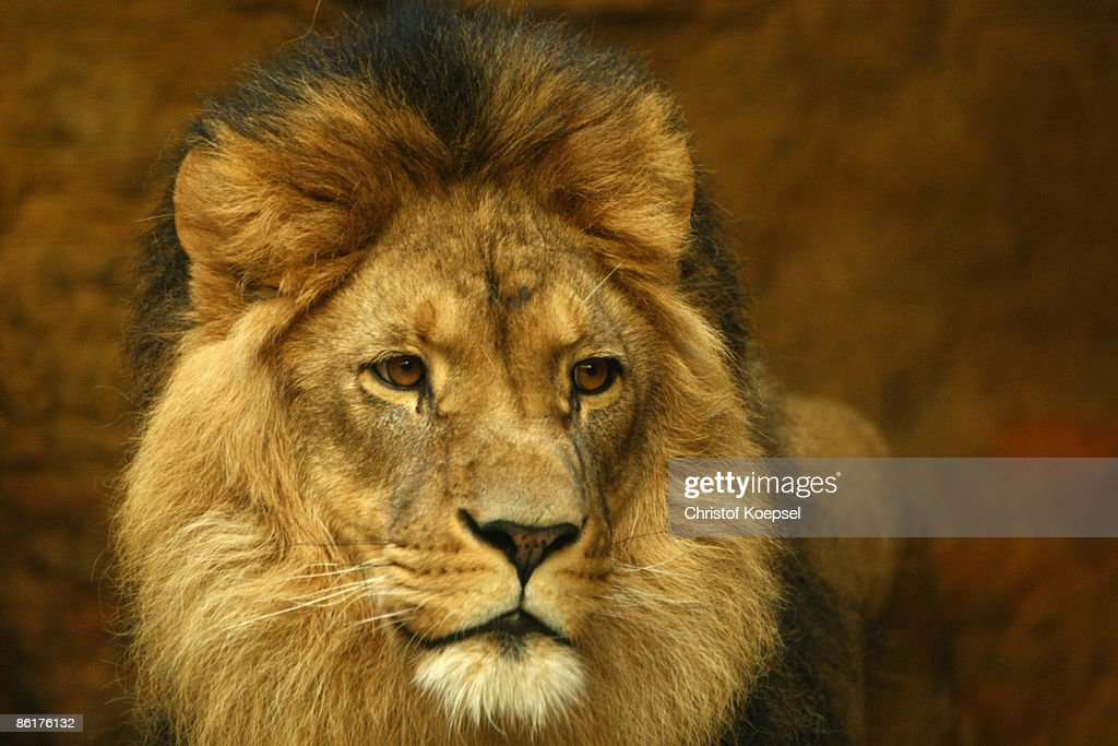 Animals Of Wuppertal Zoo : News Photo