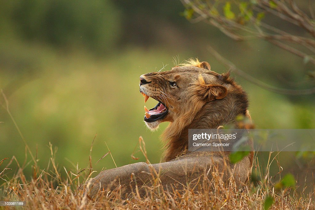 An African Safari : News Photo