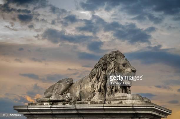 lion statue in chain bridge, budapest, hungary - ponte széchenyi lánchíd - fotografias e filmes do acervo