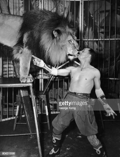 Lion tamer Captain Jim Roose feeding a lion with a lump of meat in his mouth October 1949 This lion is the mate of the lioness which killed his...