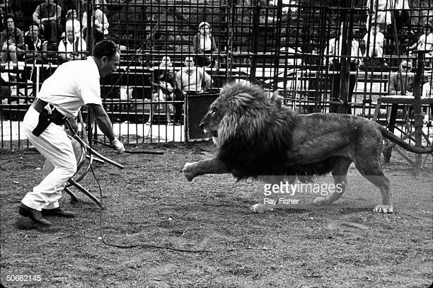 Lion tamer Clyde Beatty in a cage with a lion during his circus act