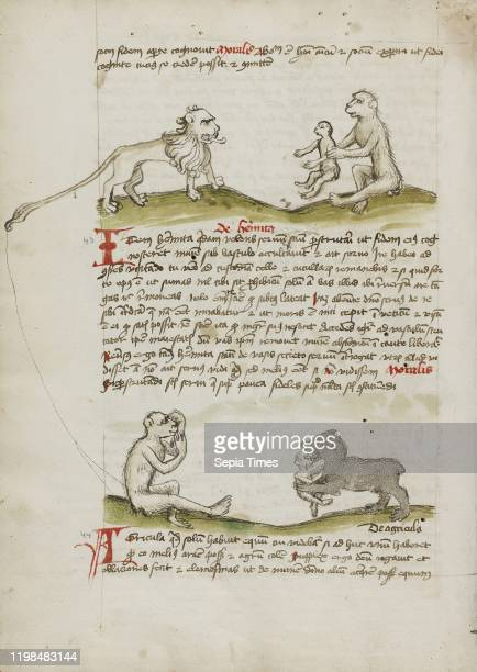 A Lion with a Monkey and his Young A Monkey A Bear Eating a Young Monkey Unknown Trier Germany third quarter of 15th century Pen and black ink and...