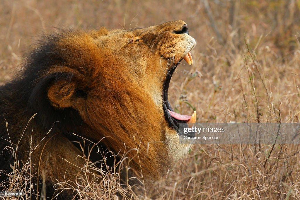 An African Safari : News Photo