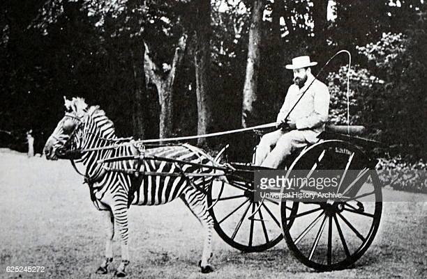Lionel Walter Rothschild 2nd Baron Rothschild rides in carriage drawn by a zebra 1895