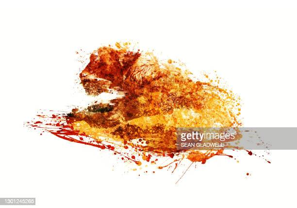 lioness illustration - art stock pictures, royalty-free photos & images