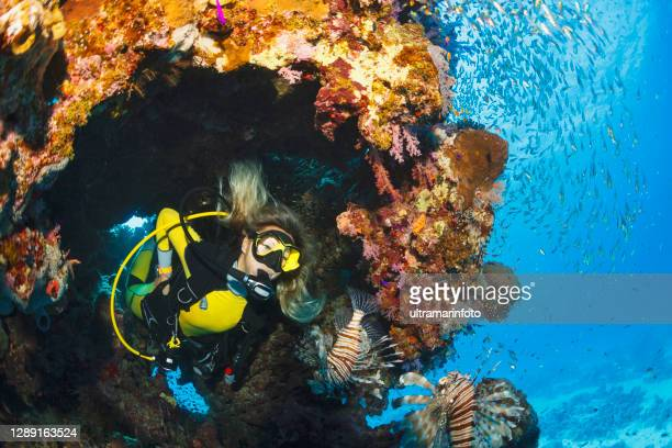 lionfish and glassfish fish underwater sea life  coral reef  underwater photo scuba diver point of view. female scuba diving in background. - scuba diving stock pictures, royalty-free photos & images