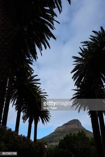 Lion's Head Mountain in Cape Town, South Africa seen between rows of palm trees