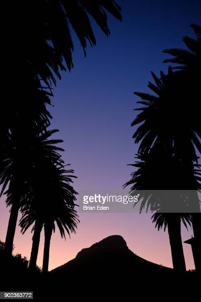 Lion's Head Mountain in Cape Town, South Africa seen between rows of palm trees at sunset
