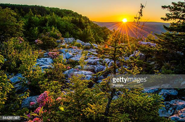 lion's head - monongahela national forest stock photos and pictures