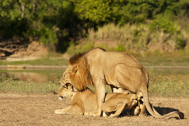 Free animal mating Images, Pictures, and Royalty-Free Stock Photos ...
