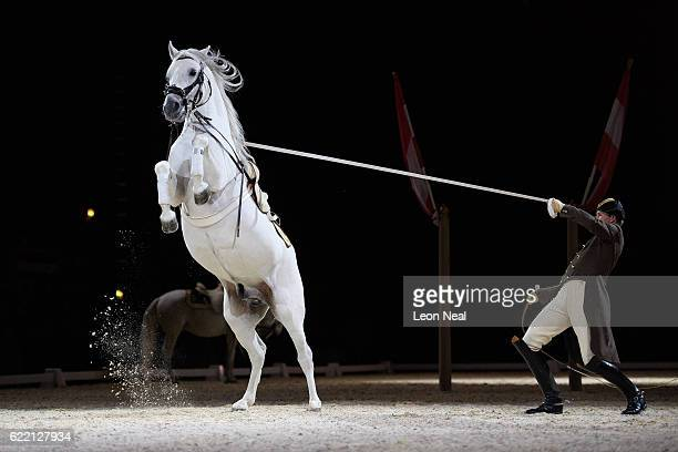 Lipizzan horse from the Spanish Riding School of Vienna takes part in a photocall to promote their upcoming performances at Wembley Arena on November...