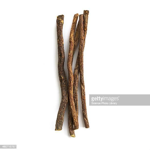 Liquorice Glycyrrhiza glabra root