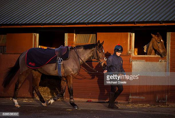 Lisa Jackson leads Balthazar King ahead of second lot at Sandhill Racing Stables on January 8 2016 in Minehead England Sandhill Racing Stables set in...