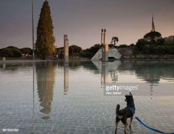 A dog looks out over a pool of water in the Eduardo VII Park.