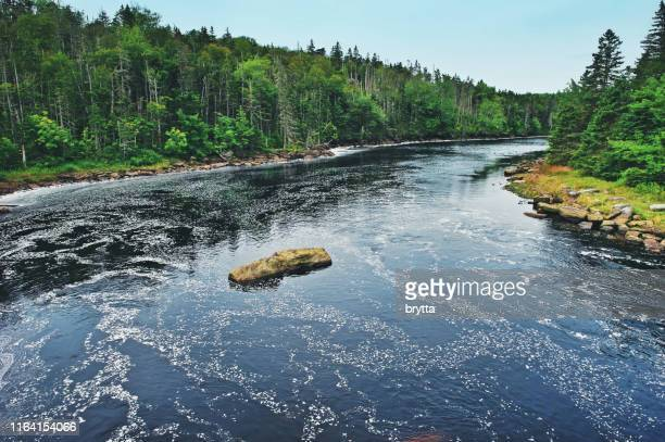 liscomb river in nova scotia, canada - river stock pictures, royalty-free photos & images