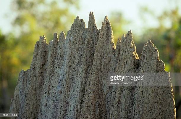 Closeup of the peaked ridge on a Magnetic Termite mound.