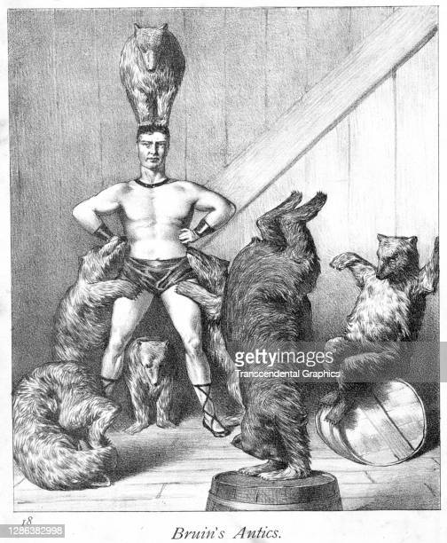 Lithograph , entitled 'Bruin's Antics', depicts a circus strongman as he stands with a group of performing bears, one balanced on his head, 1882. It...