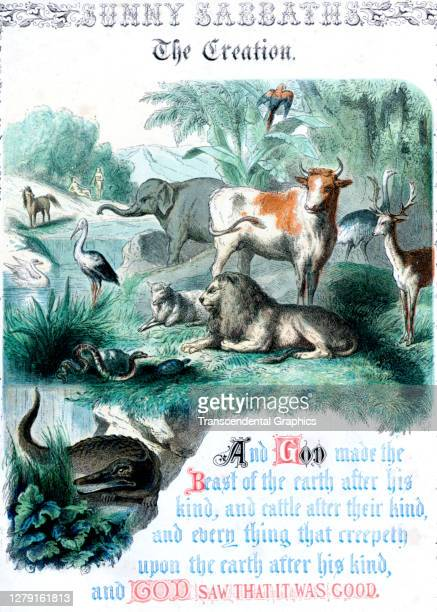 Lithographic plate depicts a scene and text from the Bible story of 'The Creation' late 19th century The book whose full title is 'Sunny Sabbaths or...