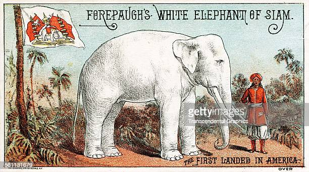 A lithographic Victorian trade card promoting the Forepaugh circus' new white elephant Buffalo New York circa 1880