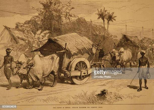 Lithographs famine in Bengal bullock hackeries for carrying grain, West Bengal, India