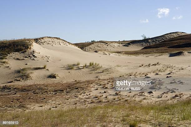 Lithuania Klaipeda County Curonian Spit Vecekrugas Grey dune