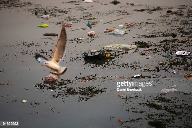 Litter and debris float down a stretch of the Yamuna river on December 14 2009 in Delhi India In a city of approximately 16 million over a quarter of...