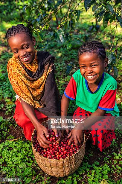 Little African girls playing with freshly picked coffee cherries, Africa