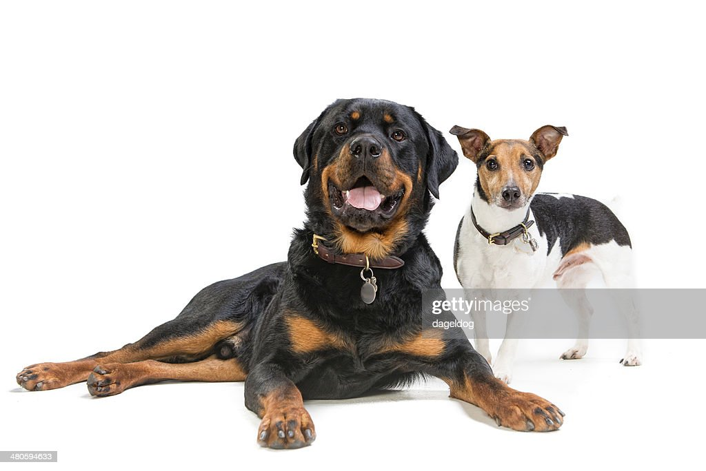 Little and Large : Stock Photo