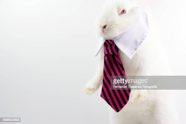 Little animal with an elegant necktie