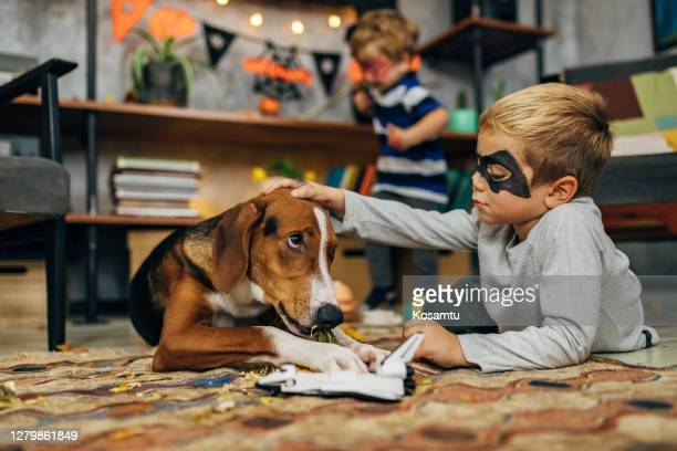 little batman petting his cute hound dog while he bite his toy - batman superhero stock pictures, royalty-free photos & images