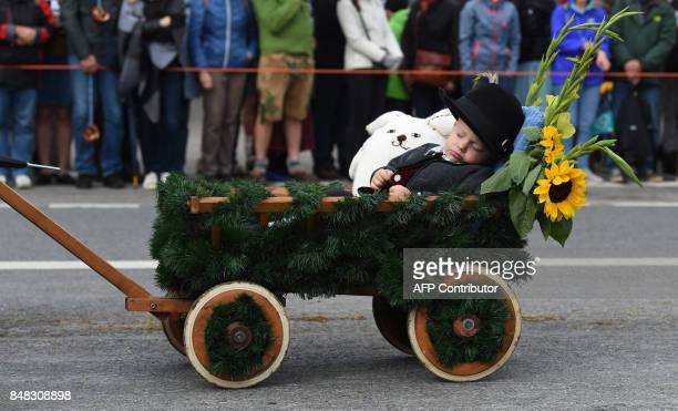 TOPSHOT Little Ben sleeps in his trolley during the traditional costume and riflemen parade during the second day of the 184th Oktoberfest beer...