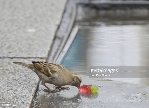 Little bird eating a jelly bean
