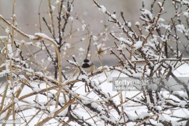 A Little Bird in Quiet Snow Fall
