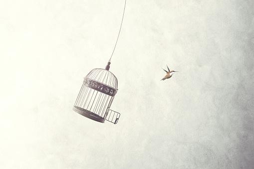 little birds escape out of birdcage 898680966