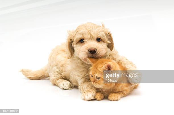 little bite, - cat and dog stock pictures, royalty-free photos & images