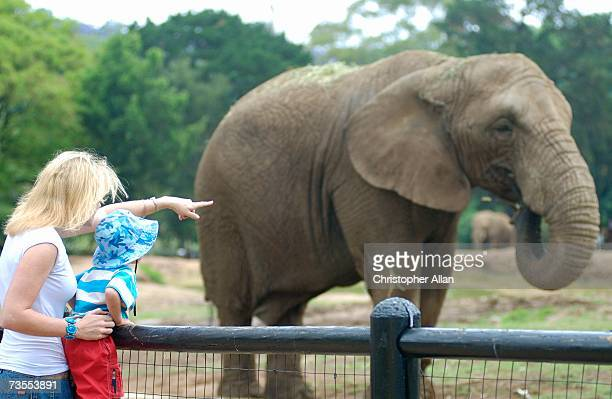 Little Boy & Adult Women Looking at an Elephant