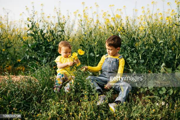 Little boy and baby girl sitting on a meadow with bunch of picked flowers
