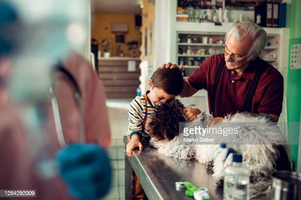 little boy and his grandfather taking their dog to the vet - euthanasia stock pictures, royalty-free photos & images