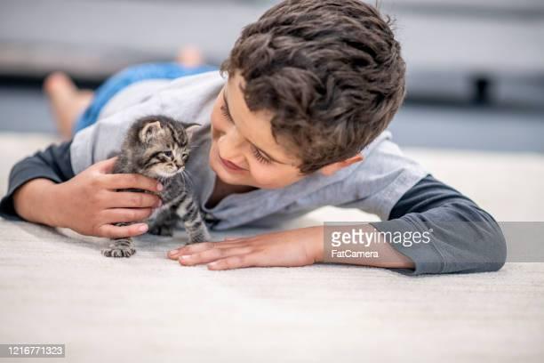 little boy and his kitten. - gattini appena nati foto e immagini stock