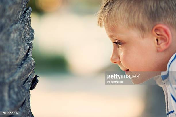 little boy and the horned beetle - horned beetle stock pictures, royalty-free photos & images